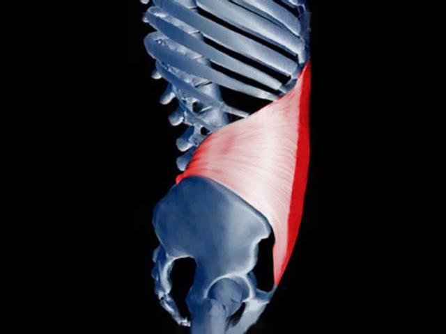 transverso_abdomen_abdominales_gimnasioparatodos